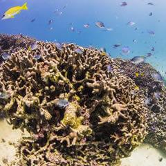 初心者も経験者も大満足!沖縄で楽しむダイビングの魅力