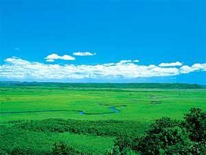 釧路湿原観光へ出かけよう!日本最大の湿原を間近に感じる旅はいかが?