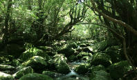 世界自然遺産「屋久島」を旅する