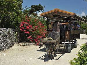 旅好き必見!沖縄のもっと深みへ。大人気・八重山諸島宿泊プラン!