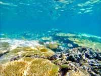 憧れの美しい海...潜りたい沖縄のダイビングスポット!