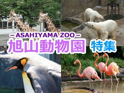 旭山動物園特集