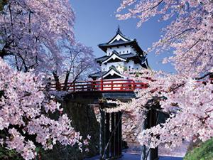これを見ずには死ねない!『春の絶景』弘前の桜のすごさ!!