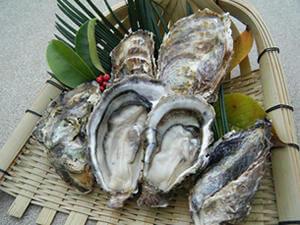 やっぱり食べたい冬の味覚、広島牡蠣(かき)の魅力教えます!