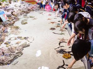美ら海水族館「イノーの生き物たち」