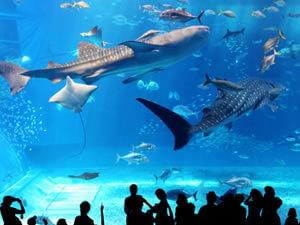 美ら海水族館「黒潮の海」