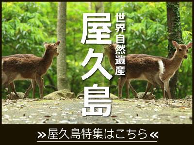 世界遺産 屋久島ツアーおすすめコース!