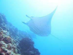 沖縄の海でダイビングを楽しむ!おすすめのスポットをご紹介