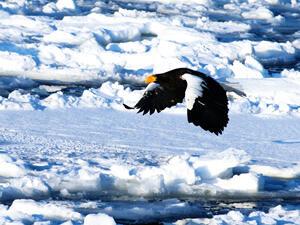 冬の北海道といえば流氷!ツアー旅行で流氷を見に行こう!
