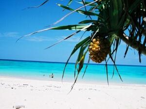夏休みは沖縄旅行でガッツリ楽しもう!おすすめ情報はコチラ