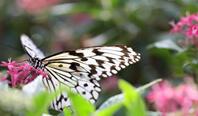 蝶が舞う癒しの離島<br>《喜界島》ツアー