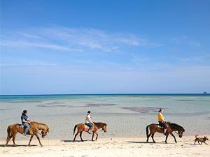 久米島馬牧場 イーフビーチでのんびり浜散歩!