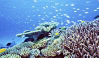 隆起珊瑚でできた島はダイビングの聖地★
